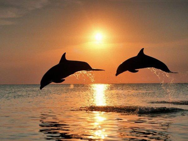 les dauphin au large du frioul