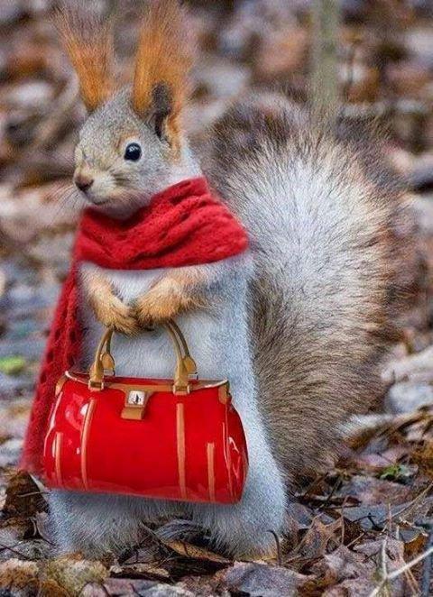 Jolis écureuils