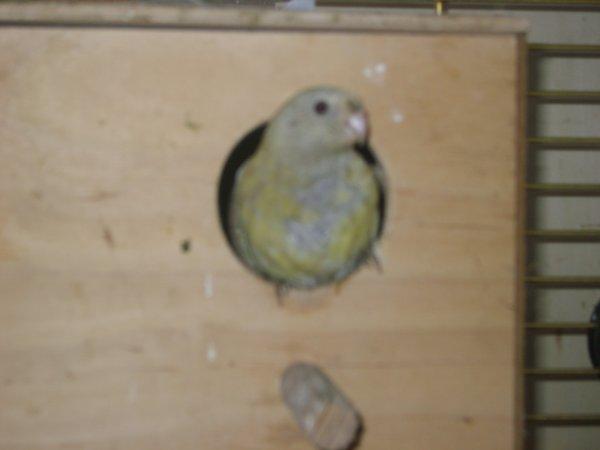 Du Nouveau Chez My-Parakeet