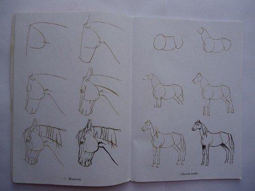 """Livre """" 50 dessins de Chevaux """""""