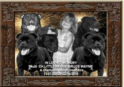 BRUCE WAYNE - 10 ans -nous a quitté brutalement le 22 octobre 2010, laissant un grand vide mais toujours présent grâce à sa nombreuse descendance.
