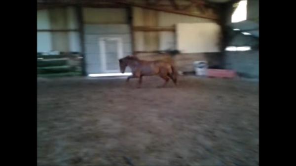28.01.2012 - saut sur sol instable  :)