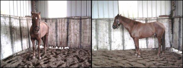 25.02.2012 - Laissez tomber, mon hongre est tout simplement magnifique !