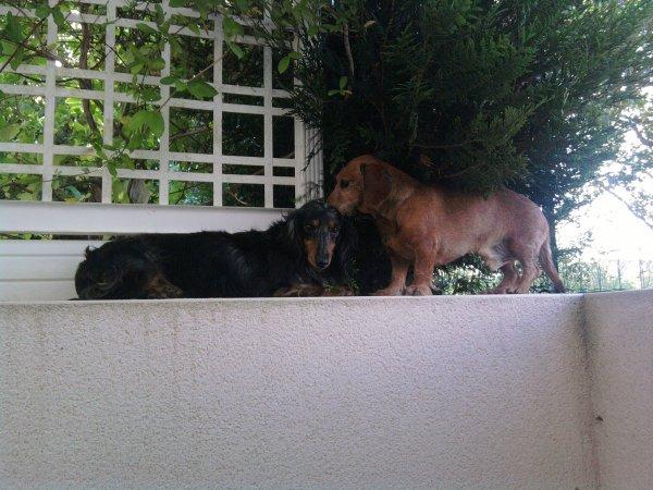 Vendredi 29 juin 2012 - La journée Nationale des Animaux :D