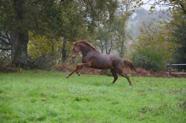 Vendredi 02 novembre 2012 - Accueil du troupeau