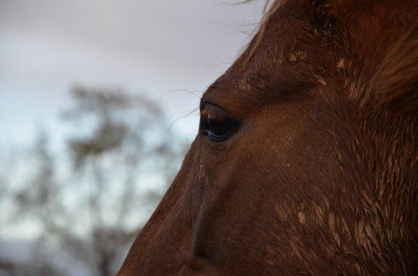 Dimanche 04 novembre 2012 - La Love Story du troupeau !