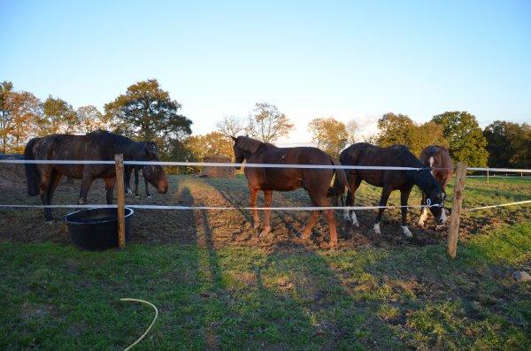 Mardi 06 novembre 2012 & Mercredi 07 novembre 2012 - Et si l'intégration passe par le grattage ?