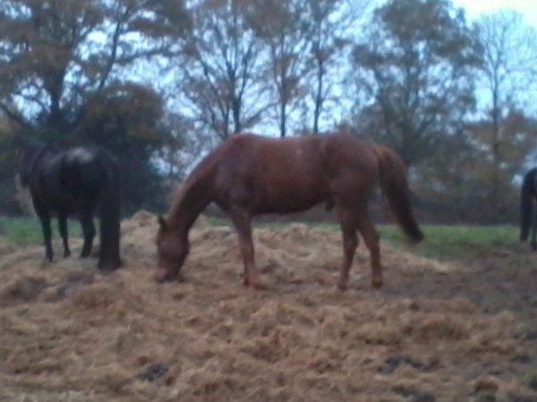 Samedi 17 Novembre 2012 - Balade !