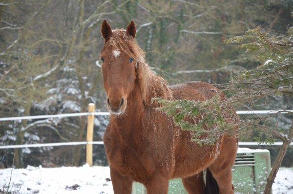 Vendredi 18 janvier 2013 - Premières Neiges de l'année !