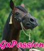 GxPassion
