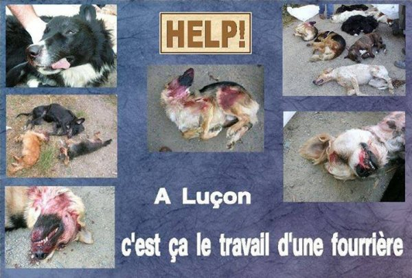 SCANDALE ! INACCEPTABLE ! SIGNONS !