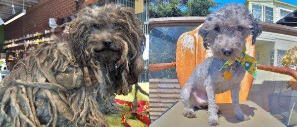 Ce petit chien terrifiant et terrifié a été récupéré après avoir passé un an dans la rue...