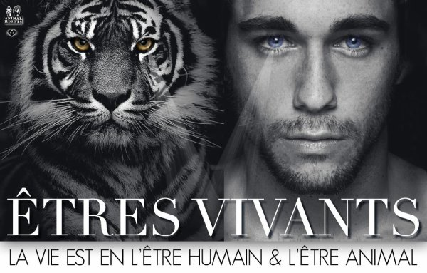 Humain / Animal