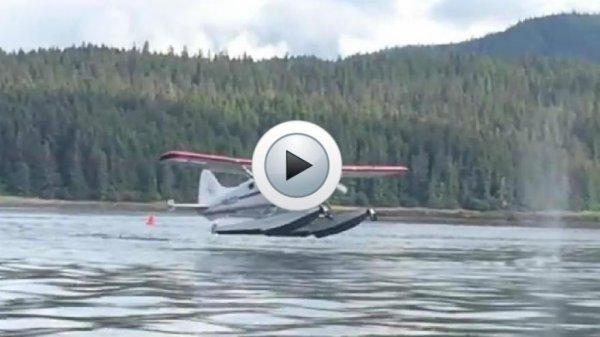 ALASKA : Un hydravion manque d'atterrir sur une baleine !