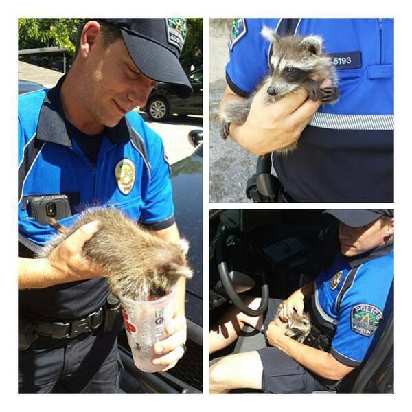 Les policiers Austin ont secouru un raton laveur :)
