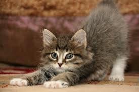 J'aime les chats ;p