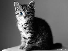 Encore des chats vu à quelle point j'aime ça !