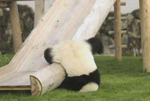Un panda qui fait du Kung-fu avec le toboggan x)