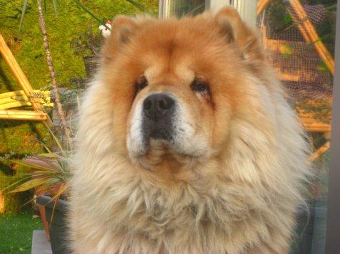 mon tit chien Lola  :)