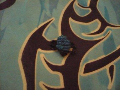 scarabé bleu