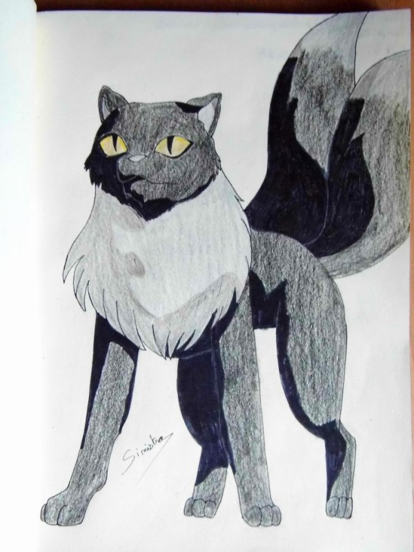 Démon chat à deux queues version animale