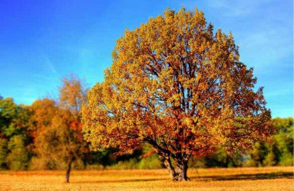 voici mon mois préféré celui de l'automne et du mois d'octobre