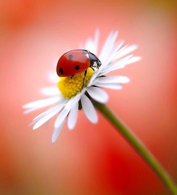 L'amour est la seule fleur qui croît et qui fleurit sans l'aide des saisons.
