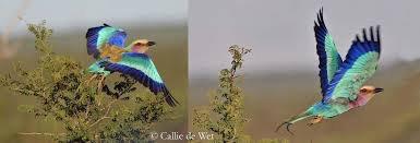 vole petit oiseau (poème de moi)