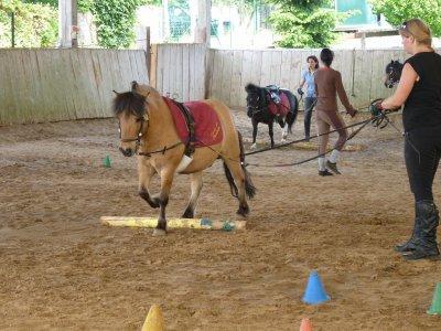 BP JEPS Tourisme Equestre (Saulx les chartreux 91)