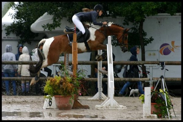 Le cheval, comme chacun le sait, est la part la plus importante du cavalier <3