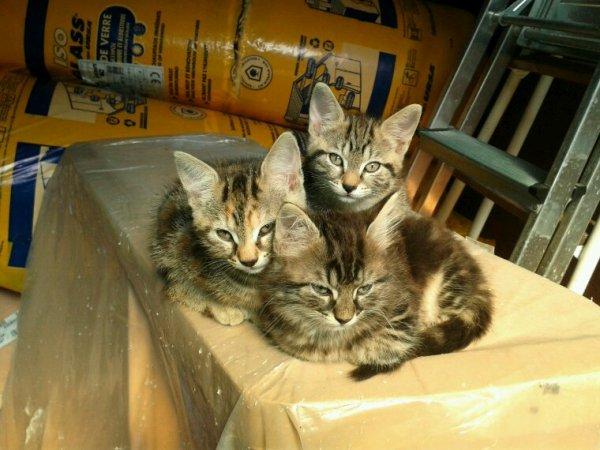 Mes 3 pitits chats : Nya, Plume et Riri