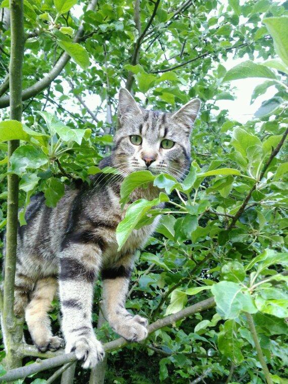 Mon chat Bouffe-tout
