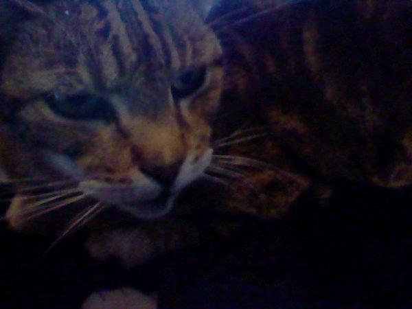 chat:poupouille