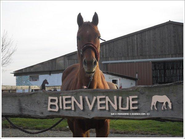 Pour parler à un cheval, il n'y a pas besoin de mots. C'est une étreinte charnelle qui alimente nos rêves