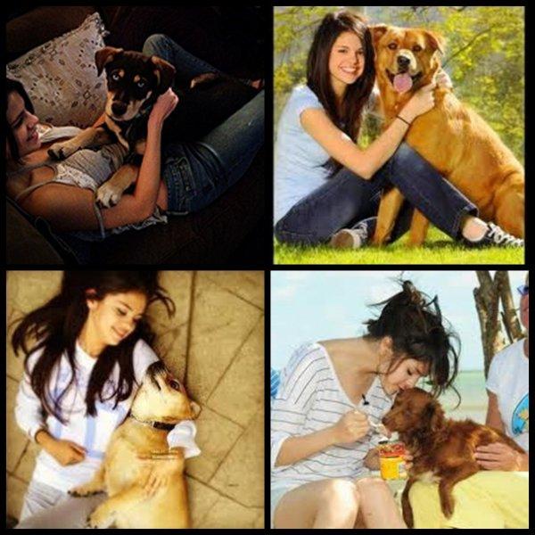 Selena Gomez et les chiens : une grande et belle histoire d'amour !!!
