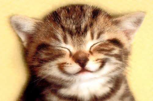 Juste un sourire ... ★