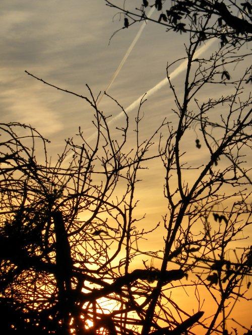 Nature au soleil couchant