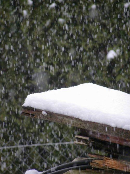 premiere neige 2012