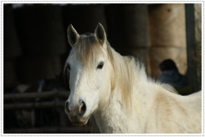 Etre heureux à cheval, c'est être entre terre et ciel, à une hauteur qui n'existe pas [Jérôme Garcin]