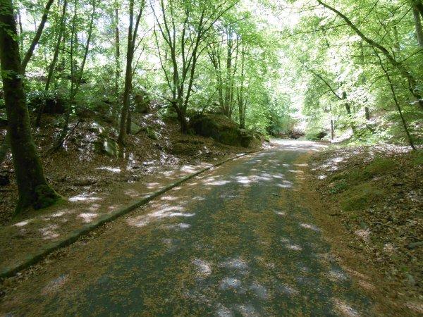 Routes forestières en Forêt de Fontainebleau (10 et 13/05/2014)
