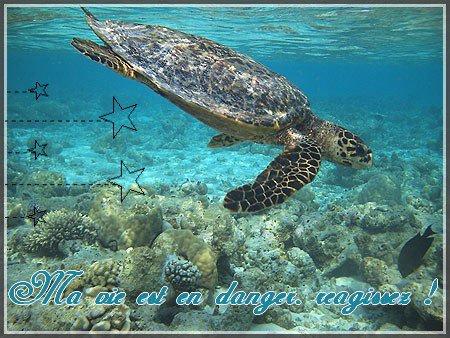 La tortue marine et les dangers