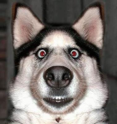 """Résultat de recherche d'images pour """"animaux marrants"""""""