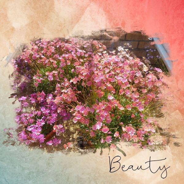 Fleurs du Jardin botanique d'Edinburg ( Ecosse)
