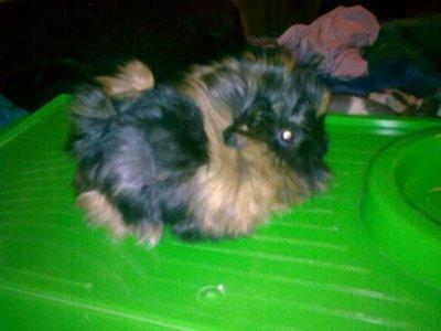 Miffy bébé (2)