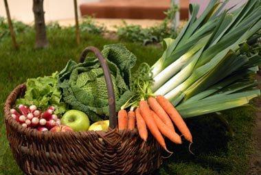 Légumes & Plantes autorisées