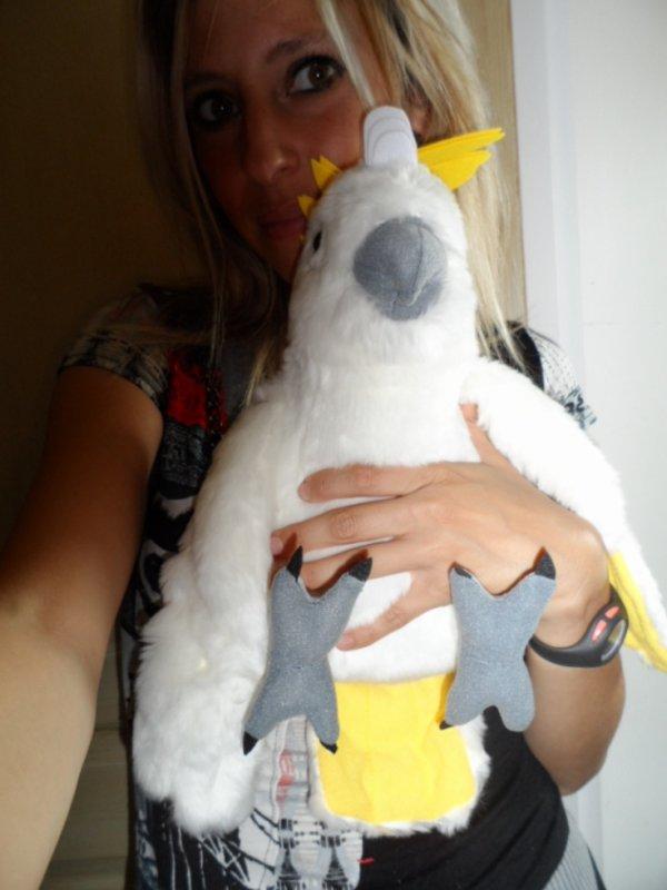 Mon nouveau compagnon : MIKO le Cacatoès <3