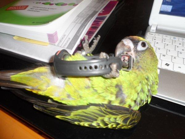 C'est trop bien un perroquet à l'envers!!!