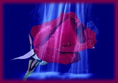 la rose de l'amitié