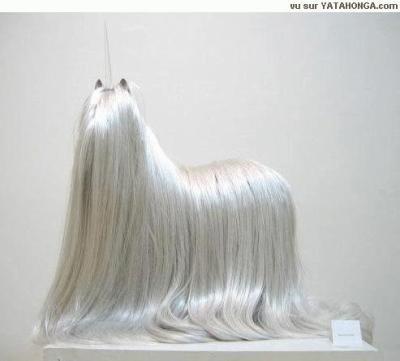 Le plus beau chien du monde hummer - Le plus beau coup franc du monde ...
