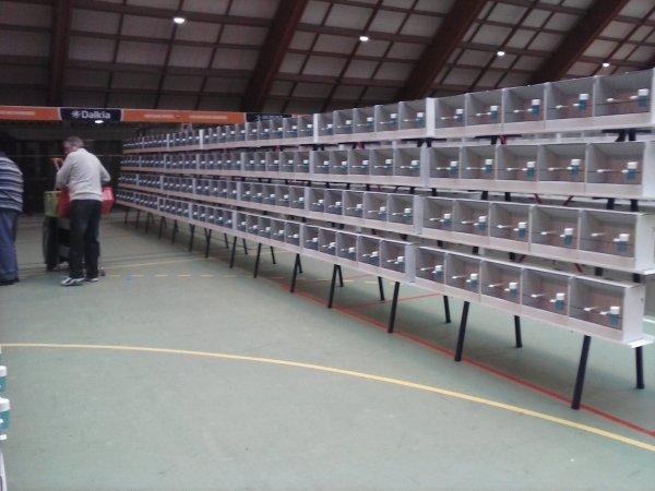 dans le lot il y en a toujour un!!!!!!!!!!!!!!!!!! (derniere photo ces la bourse 600 cages